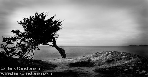 Tree and sea cliff silhouette, Half Moon Bay, California