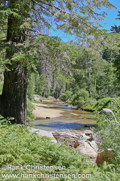 The campsites of Lower Paradise Valley line the banks of the south fork of King\'s River, Kings Canyon National Park
