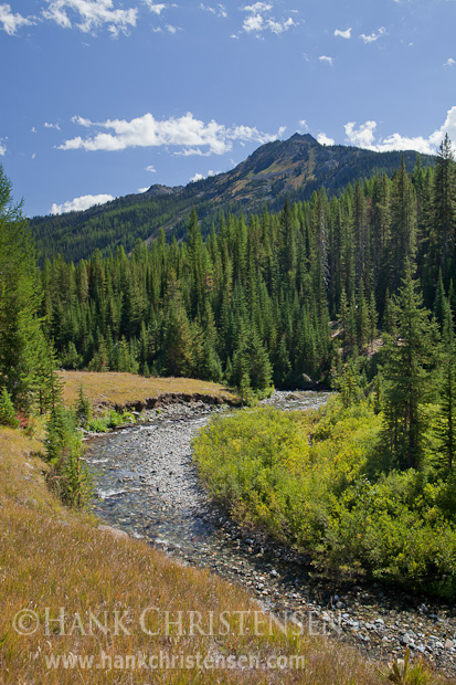 The Imnaha River sweeps through a river valley surrounded by trees, Eagle Cap Wilderness, Oregon