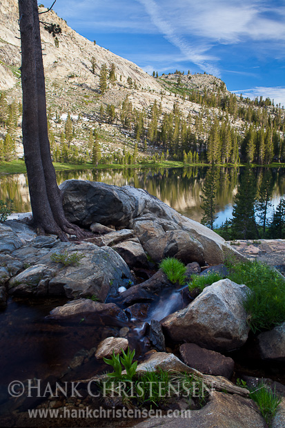 Trees and vegetation grow amid Sierra granite, Ten Lakes, Yosemite National Park