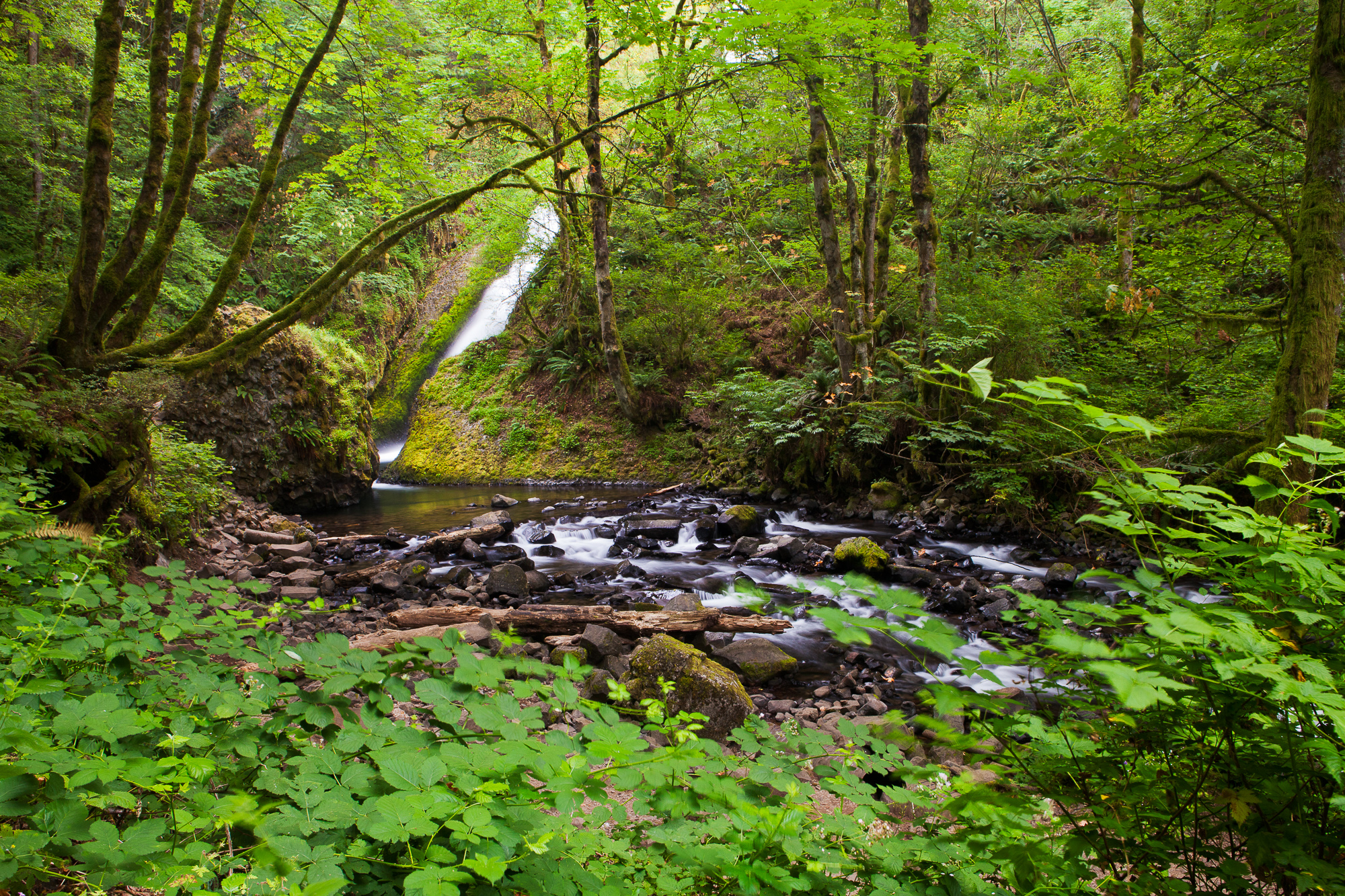 Bridal Veil Falls opens up into a creek that flows through dense forest, Columbia River Gorge, Oregon