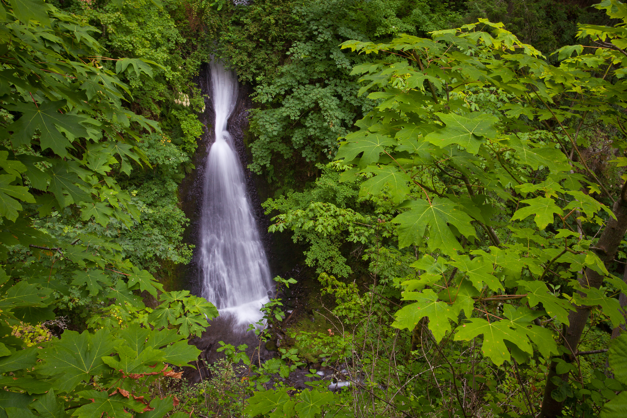Shepperds Dell Falls empties into a narrow canyon overgrown with greenery, Columbia River Gorge, Oregon