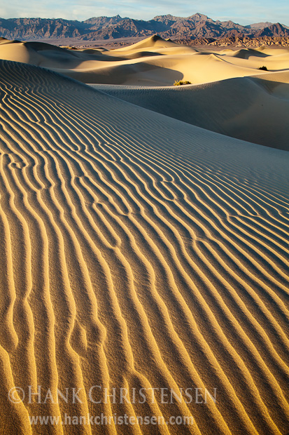 The Mesquite Dunes stretch across the valley just north of Stovepipe Wells, Death Valley National Park