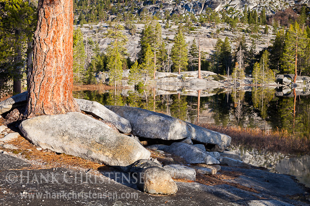 A large pine grows out of a pile of granite boulders along the shore of Lake Vernon, Yosemite National Park