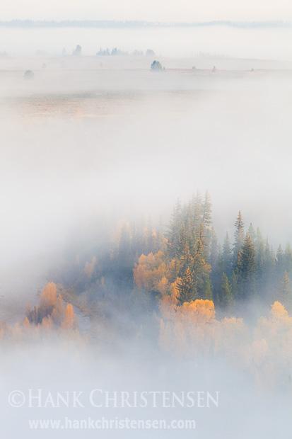 Bright fall colors show through the dense fog that shrouds the landscape, Grand Teton National Park