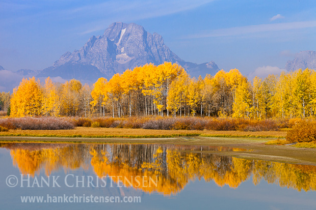 The fall colors of Aspen contrast the blue hues of the Tetons, Grand Teton National Park