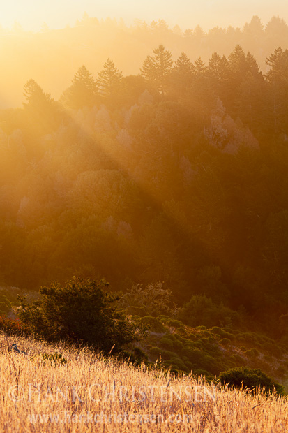 The early rays of sun peak through a dissipating fog along the Sonoma Coast