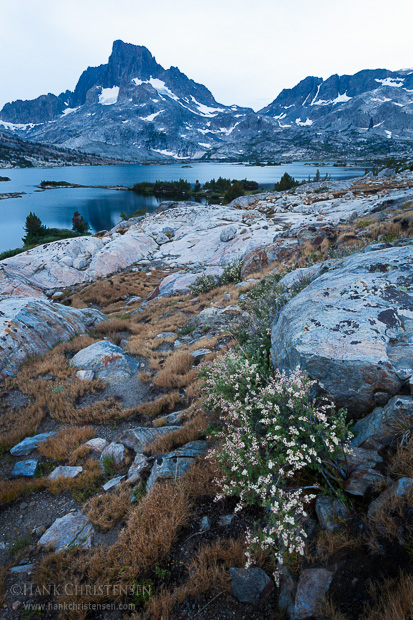 Wildflowers grow next to a boulder, Thousand Island Lake, Ansel Adams Wilderness