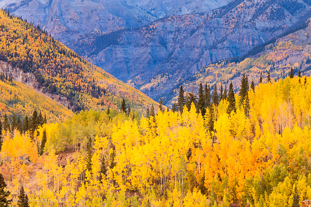 Abrams Mountain caps the end of a valley filled will fall color, Ouray Colorado