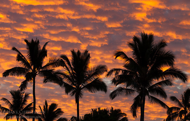 Palm trees are silhouetted by sunrise clouds, Kauai, Hawaii.