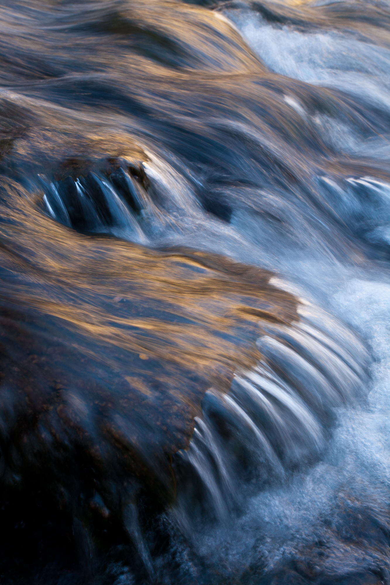Silken water reflects the gold colors of fall, South Fork Bishop Creek, Inyo National Forest, CA