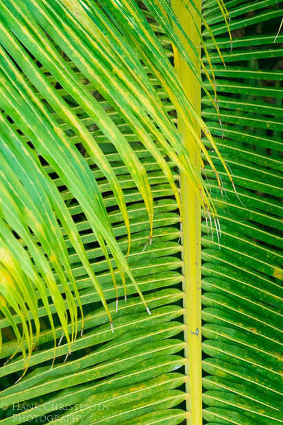 Interwoven palm fronds create various designs when viewed from above, Puerto Vallarta, Mexico