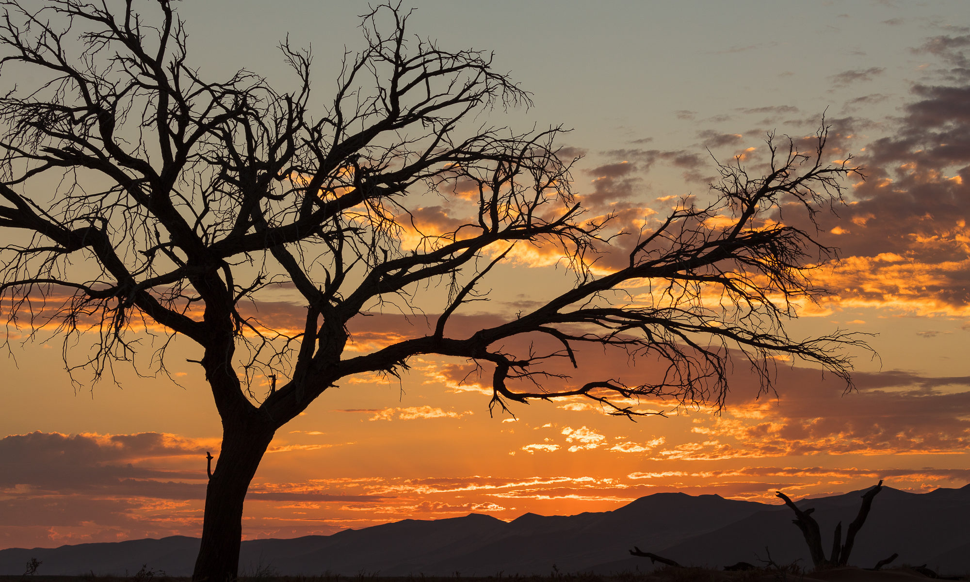 A desert tree silhouettes against a sunset sky, Namib-Naukluft National Park, Namibia.