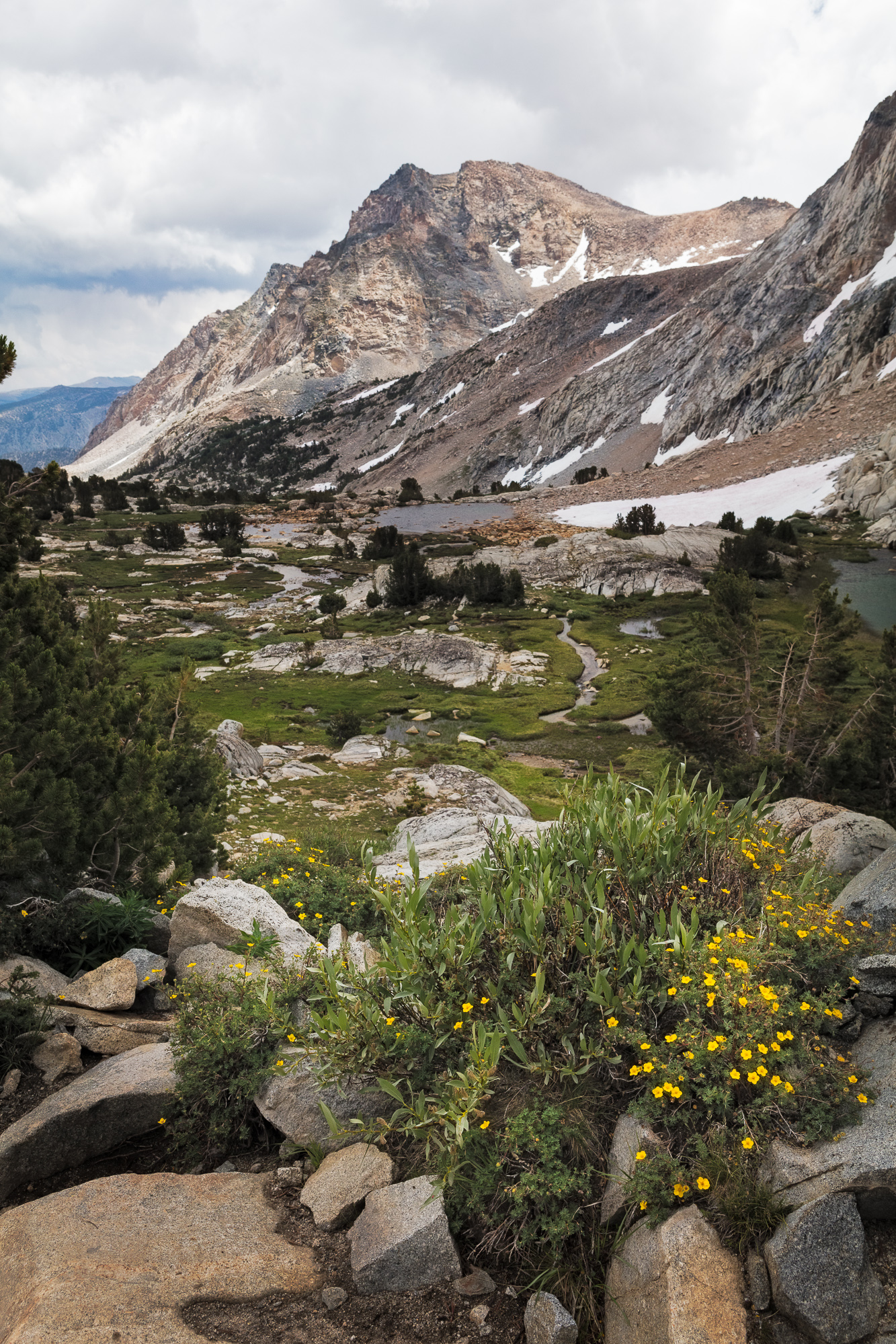 Wildflowers adorn the meadows below Piute Pass, Inyo National Forest, CA