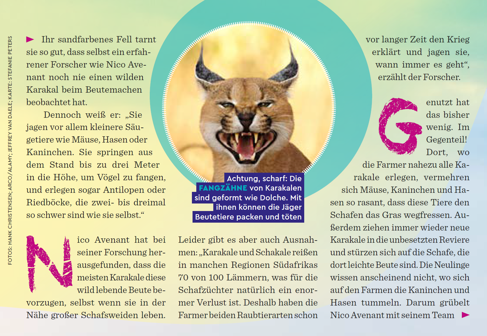 Excerpt from Feb 2018 issue of Geolino Magazine of article about the African caracal.